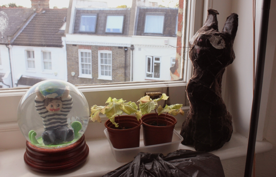 windowsill1
